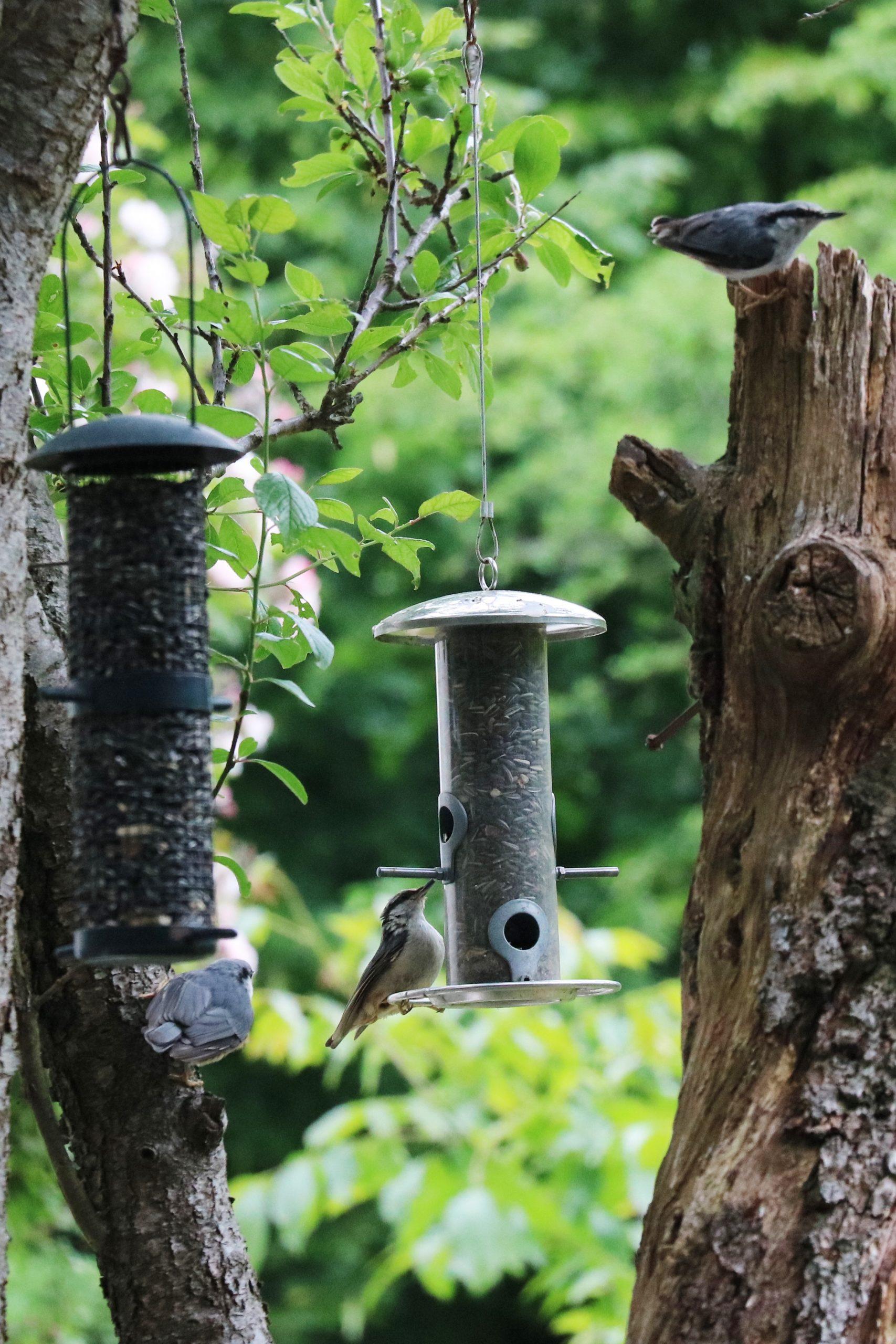 Bird feeders in use